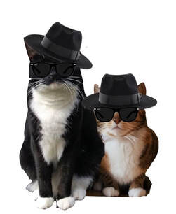 Tuxedo & Tiger cat wearing Blues Brother's hat and glasses